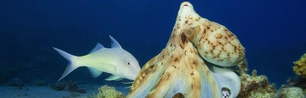 Octopus Feeding