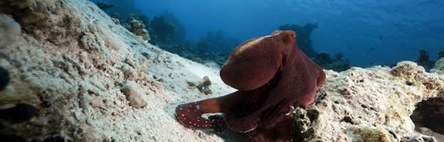 Octopus Videos