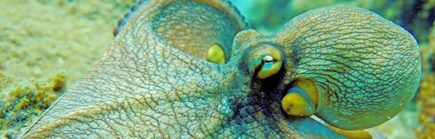 Octopus in Culture